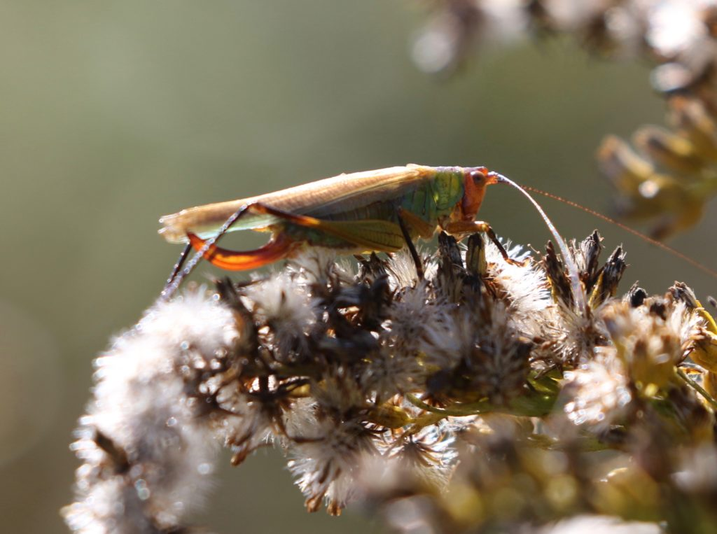 Blurry image of the katydid backlit by the sun.