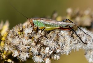 Feature photo for Katydid post.