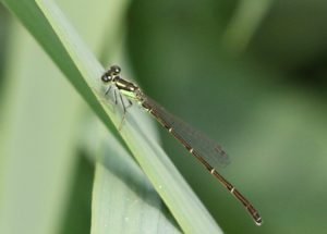 Feature image for the Forktail post.